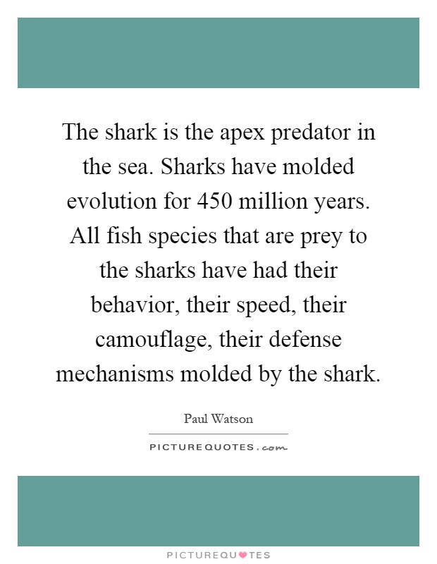 Sharks Quotes | Sharks Sayings | Sharks Picture Quotes