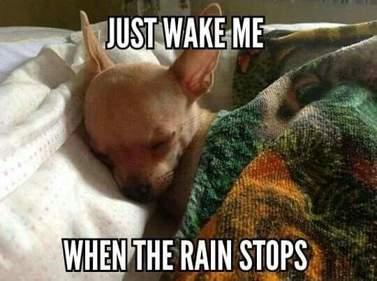 Just wake me when the rain stops Picture Quote #1