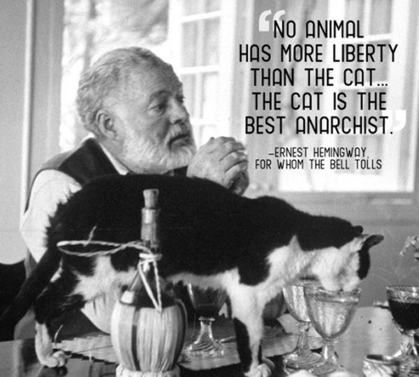 No animal has more liberty than the cat. The cat is the best anarchist Picture Quote #1