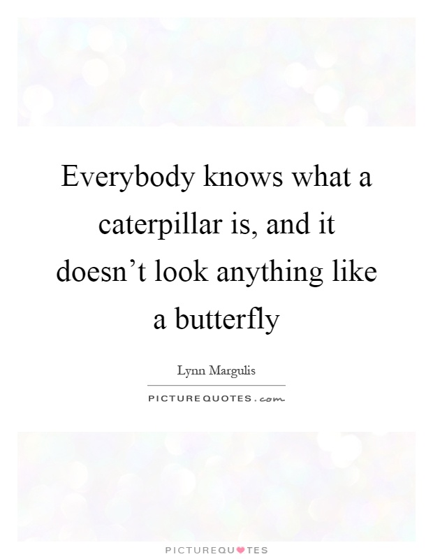 Everybody knows what a caterpillar is, and it doesn't look anything like a butterfly Picture Quote #1