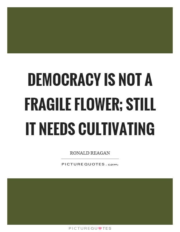 Democracy is not a fragile flower; still it needs cultivating Picture Quote #1
