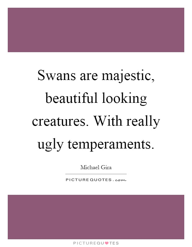 Swans are majestic, beautiful looking creatures. With really ugly temperaments Picture Quote #1