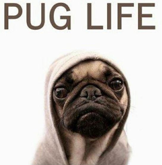 Pug life Picture Quote #1