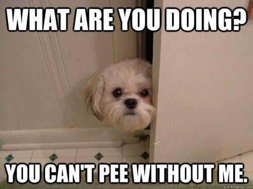 What are you doing? You can't pee without me Picture Quote #1