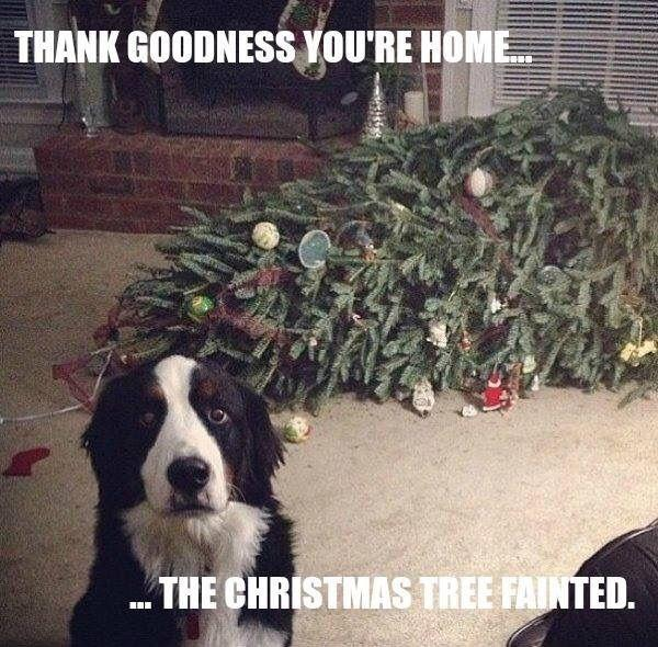 Thank goodness you're home. The Christmas tree fainted Picture Quote #1