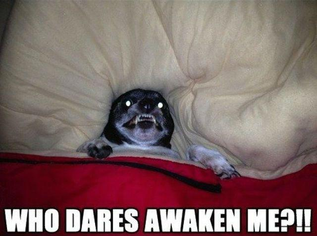 Who dares awaken me?!! Picture Quote #1