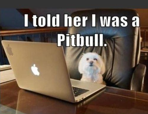 I told her I was a pitbull Picture Quote #1