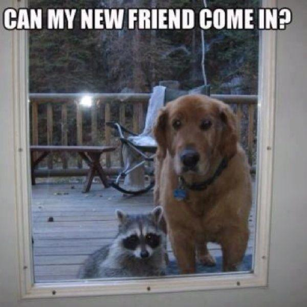 Can my new friend come in? Picture Quote #1