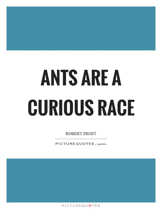 Ants are a curious race Picture Quote #1