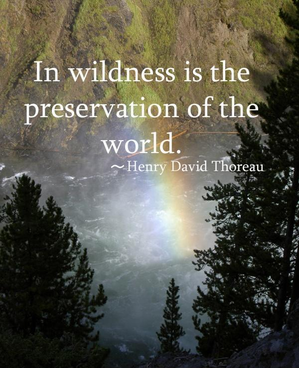In wilderness is the preservation of the world Picture Quote #1