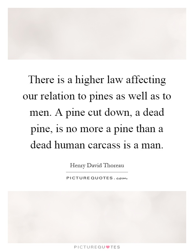 There is a higher law affecting our relation to pines as well as to men. A pine cut down, a dead pine, is no more a pine than a dead human carcass is a man Picture Quote #1