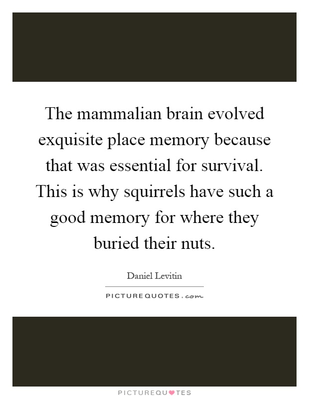 The mammalian brain evolved exquisite place memory because that was essential for survival. This is why squirrels have such a good memory for where they buried their nuts Picture Quote #1