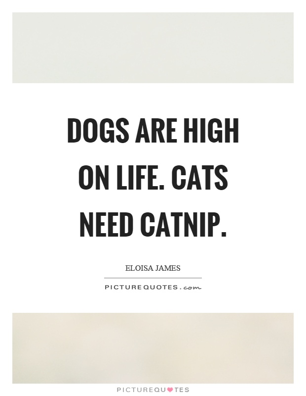 Dogs are high on life. Cats need catnip Picture Quote #1