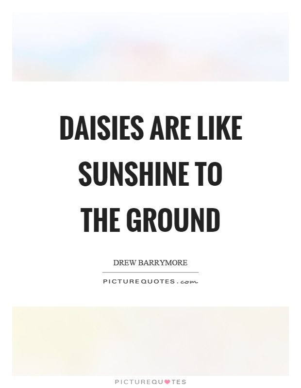 Daisies are like sunshine to the ground Picture Quote #1