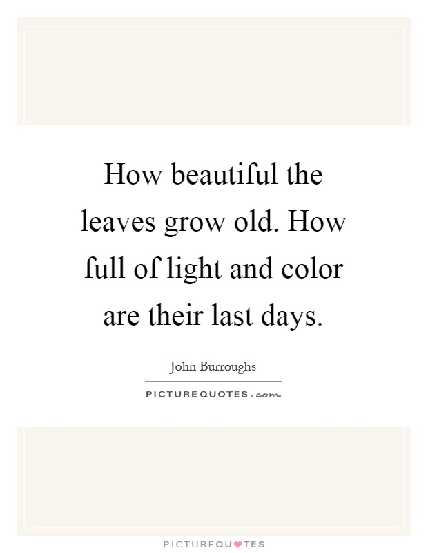 How beautiful the leaves grow old. How full of light and color are their last days Picture Quote #1