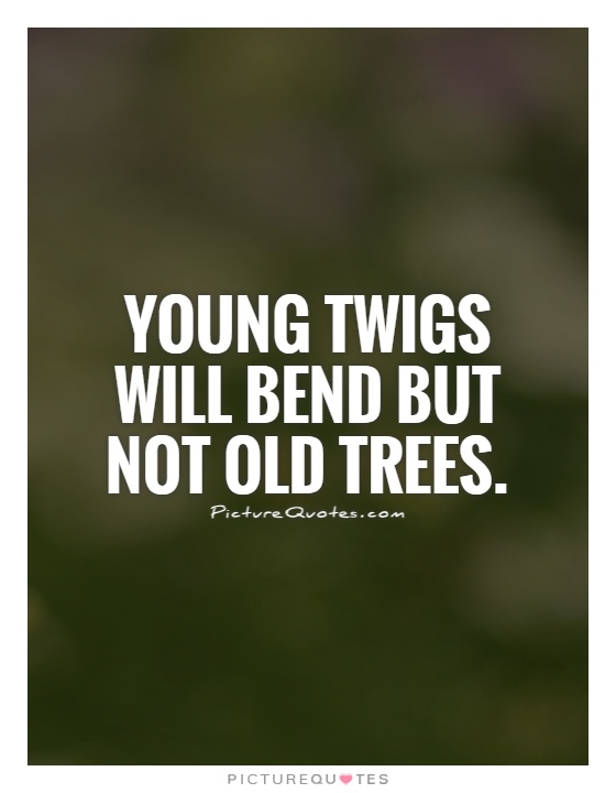 Young twigs will bend but not old trees Picture Quote #1