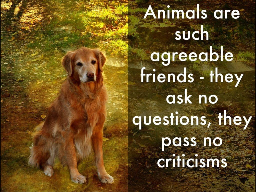 Animals are such agreeable friends - they ask no questions, they pass no criticisms Picture Quote #1