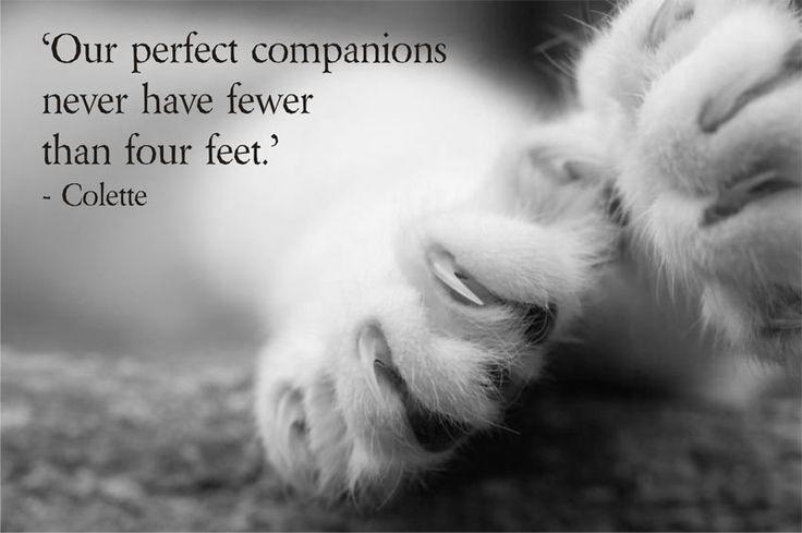 Our perfect companions never have fewer than four feet Picture Quote #1
