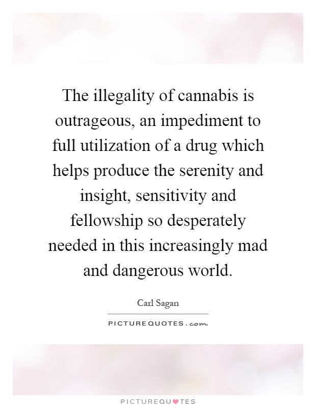The illegality of cannabis is outrageous, an impediment to full utilization of a drug which helps produce the serenity and insight, sensitivity and fellowship so desperately needed in this increasingly mad and dangerous world Picture Quote #1