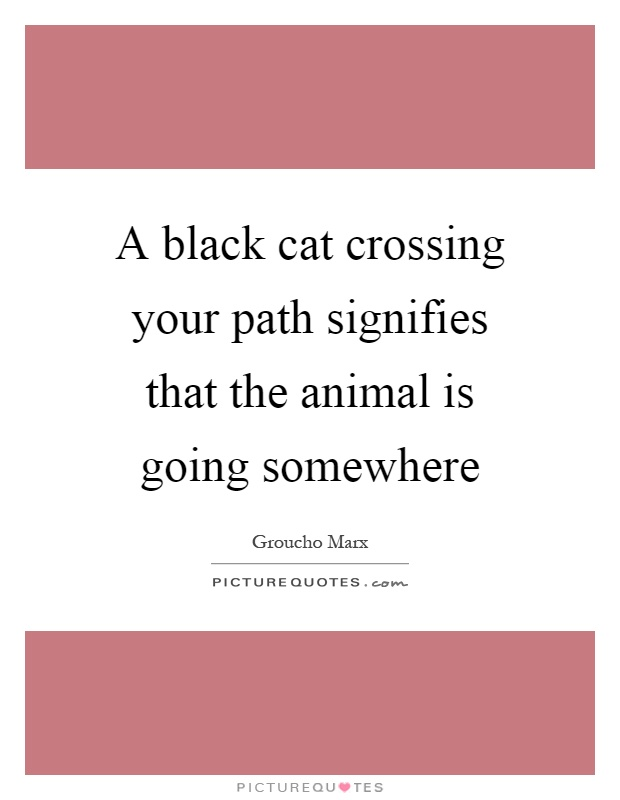 A black cat crossing your path signifies that the animal is going somewhere Picture Quote #1