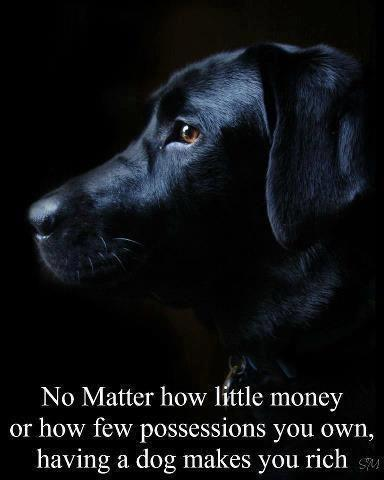 No matter how little money or how few possessions you own, having a dog makes you rich Picture Quote #1