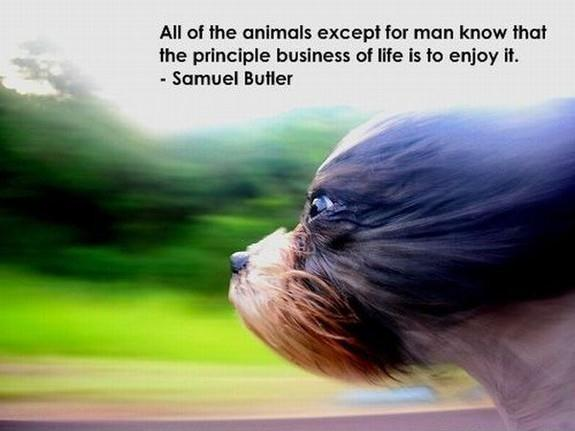 All of the animals except for man know that the principle business of life is to enjoy it Picture Quote #1