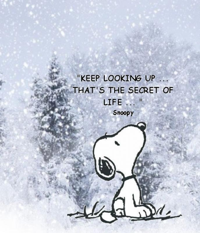 Keep looking up...that's the secret of life Picture Quote #1