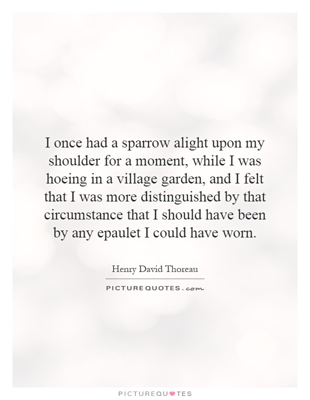 I once had a sparrow alight upon my shoulder for a moment, while I was hoeing in a village garden, and I felt that I was more distinguished by that circumstance that I should have been by any epaulet I could have worn Picture Quote #1
