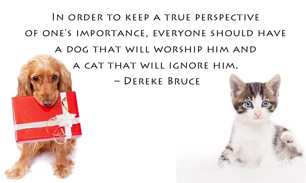 In order to keep a true perspective of one's importance, everyone should have a dog that will worship him and a cat that will ignore him Picture Quote #1