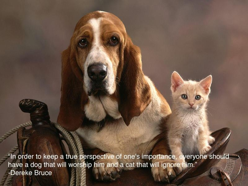 In order to keep a true perspective of one's importance, everyone should have a dog that will worship him and a cat that will ignore him Picture Quote #2