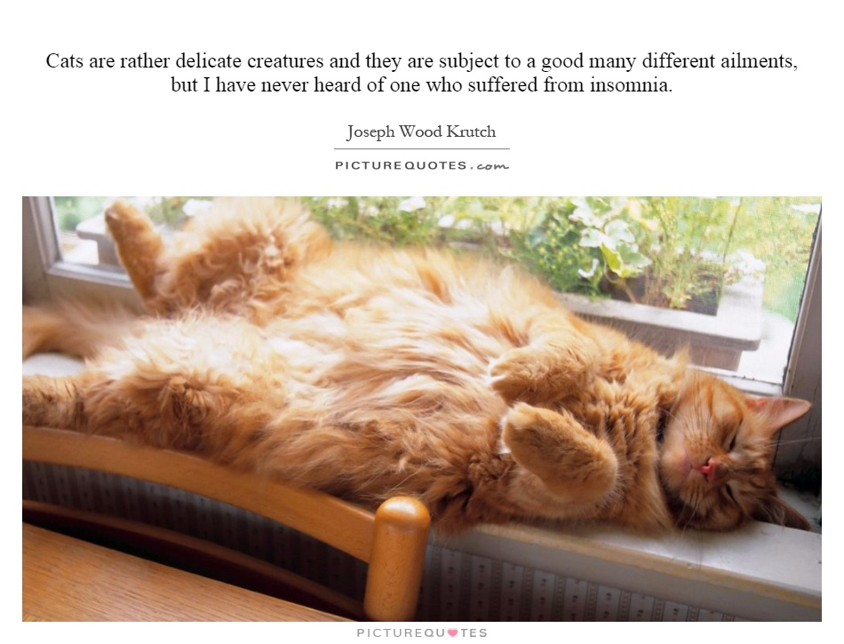 Cats are rather delicate creatures and they are subject to a good many different ailments, but I have never heard of one who suffered from insomnia Picture Quote #1
