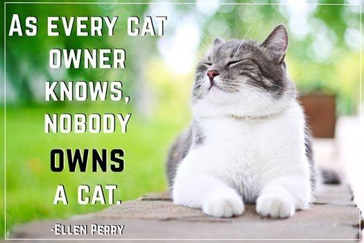 As every cat owner knows, nobody owns a cat Picture Quote #1