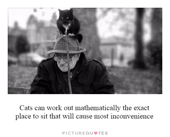 Cats can work out mathematically the exact place to sit that will cause most inconvenience Picture Quote #1