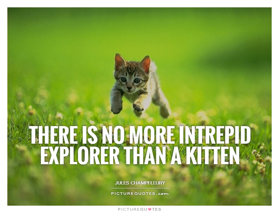 There is no more intrepid explorer than a kitten Picture Quote #1