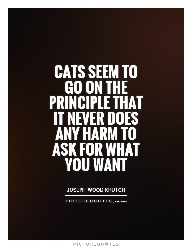 Cats seem to go on the principle that it never does any harm to ask for what you want Picture Quote #1