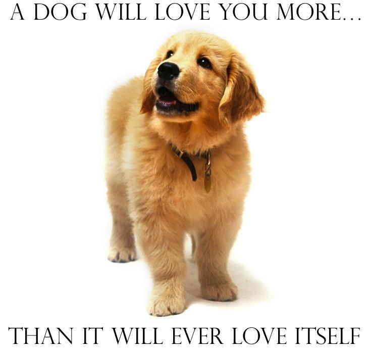 A dog will love you more Picture Quote #1