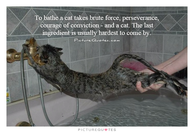 To bathe a cat takes brute force, perseverance, courage of conviction - and a cat. The last ingredient is usually hardest to come by Picture Quote #1