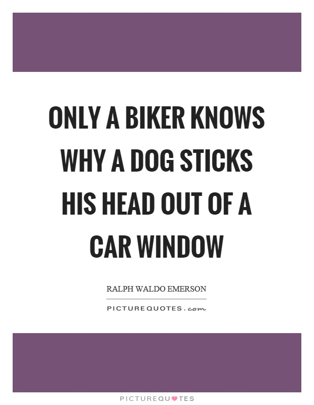 Only a biker knows why a dog sticks his head out of a car window Picture Quote #1
