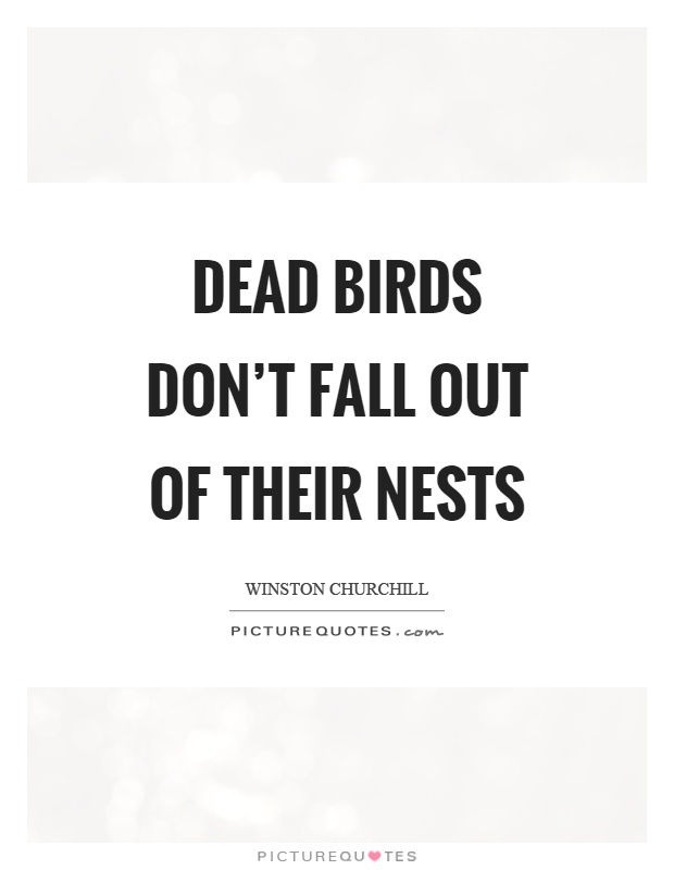 Dead birds don't fall out of their nests Picture Quote #1