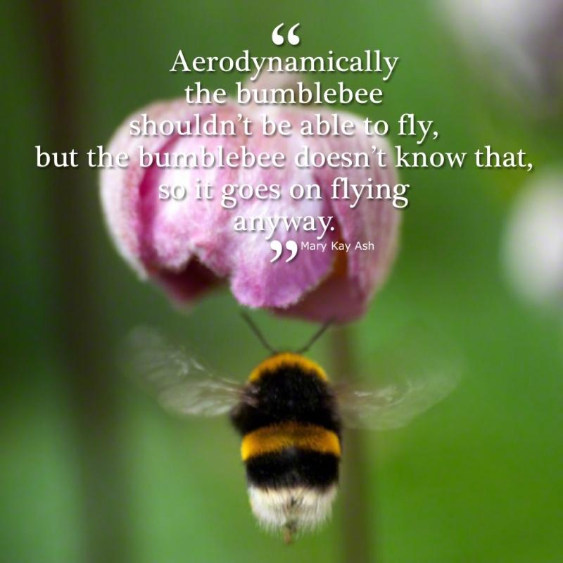 Aerodynamically the bumblebee shouldn't be able to fly, but the bumblebee doesn't know that so it goes on flying anyway Picture Quote #1