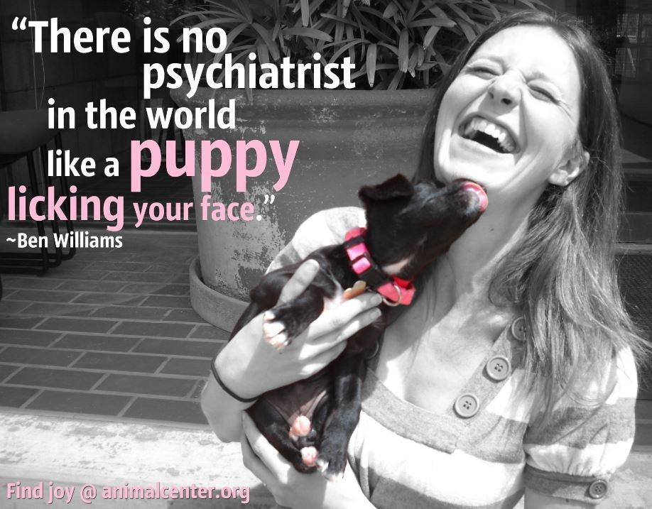 There is no psychiatrist in the world like a puppy licking your face Picture Quote #1