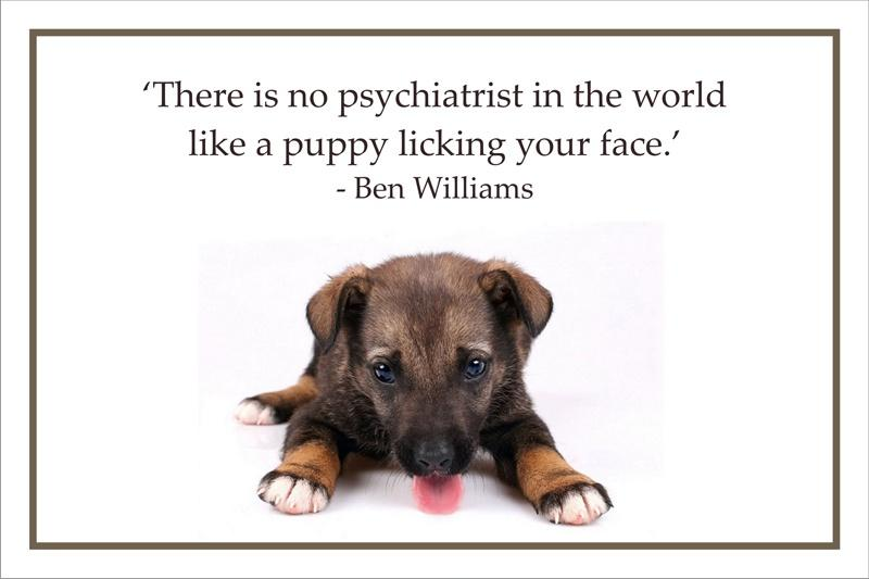 There is no psychiatrist in the world like a puppy licking your face Picture Quote #2