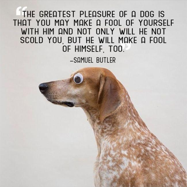 The great pleasure of a dog is that you may make a fool of yourself with him and not only will he not scold you, but he will make a fool of himself too Picture Quote #1