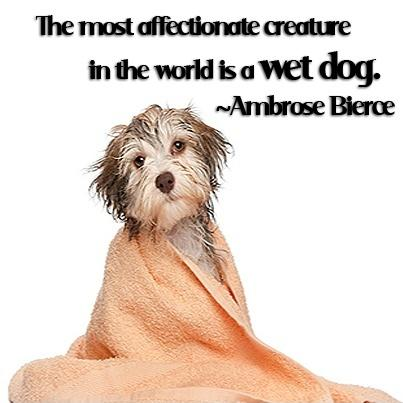 The most affectionate creature in the world is a wet dog Picture Quote #1