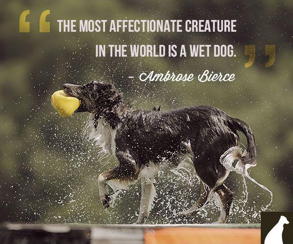 The most affectionate creature in the world is a wet dog Picture Quote #3