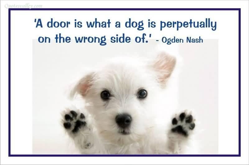 A door is what a dog is perpetually on the wrong side of Picture Quote #1