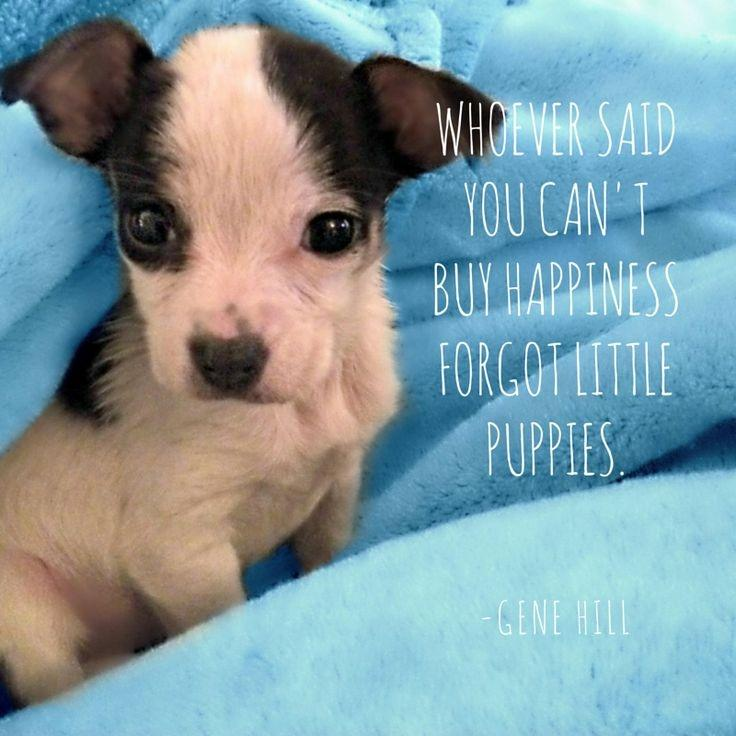 Whoever said you can't buy happiness forgot little puppies Picture Quote #1
