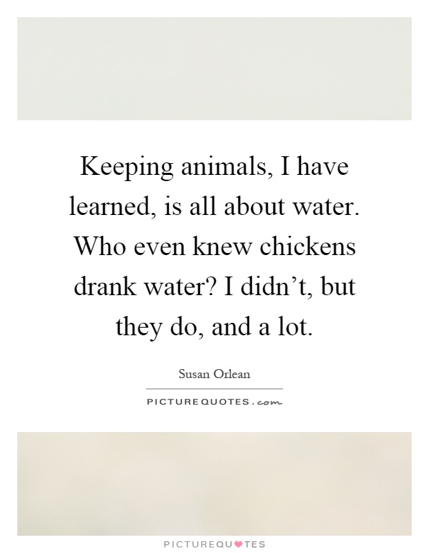 Keeping animals, I have learned, is all about water. Who even knew chickens drank water? I didn't, but they do, and a lot Picture Quote #1