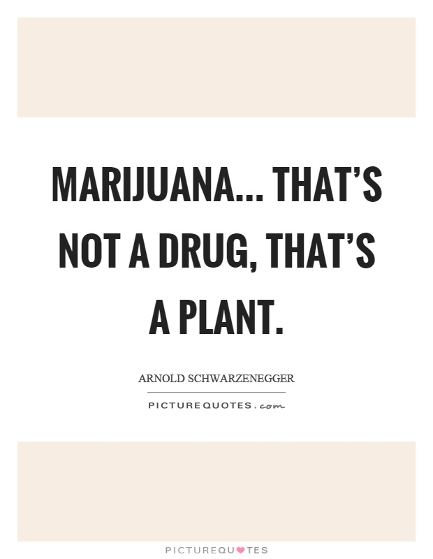 Marijuana... That's not a drug, that's a plant Picture Quote #1