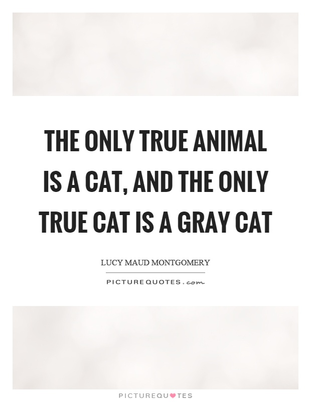 The only true animal is a cat, and the only true cat is a gray cat Picture Quote #1